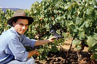 Young man picking grapes from vine, portrait