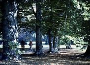 Munich, Bavaria, Germany, English Garden