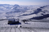 wine, vineyard, cultivation, outhouse, agriculture, scenery, landscape, panorama, hill, fields, series, picture series