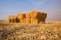 Straw bales. Toledo province, Castilla-La Mancha, Spain