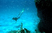 Diver. Los Roques National Park, Venezuela