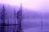 Misty lake and trees Magenta colors