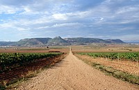 Road in the fields. Titaguas. Los Serranos. Valencia province. Spain