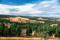 Custer State Park, South Dakota. These dry-looking hills actually produce very abundant grasses for the park´s herds of bison, deer, elk, wild burros ...