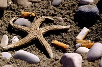Beach pollution. Cigarette butts and a dead starfish on a beach.