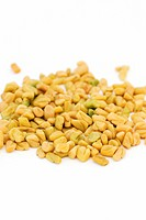 Fenugreek seeds (Trigonella foenum-gracecum). This aromatic herb is commonly used as a spice to flavour curries but is also used in herbal medicine fo...