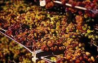 Close_up of dried grapes, Australia