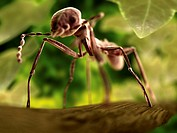 Ant, computer artwork. The head is at upper left,  with two antennae branching out on either side. Like all insects, it has six legs attached to its t...