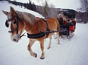 Horse pulling sleigh on snow covered road, close-up of horse