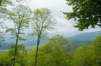 Spring Image from Newfound Gap Road, Great Smoky Mtns Nat. Park, North Carolina, USA