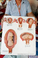 Book Fair International, fetus development models, anti abortion, pregnancy. Miami. Florida. USA.
