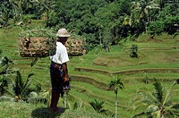 Indonesia, Bali, Rice Terraces, Field Worker