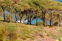 Giglio Porto, the coast at Lazzaretto. Isola del Giglio. Tuscany. Italy.