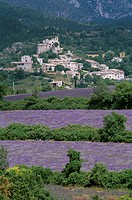 Lavender Fields and Village, St. Jurs, Provence, France
