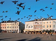 Pigeons at Main Market Square in picturesque Zamosc member of UNESCO,, Poland