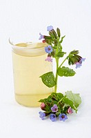 Common Lungwort (Pulmonaria officinalis) infusion