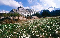 Ars, 2195m, Lobhoerner, 2566m. Bernies Oberland, Bern. Alps, spring. Switzerland