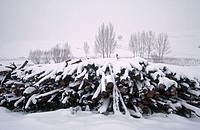 Stack of logs with snow. Bosque de Ribera. Serrania de Cuenca. Tragacete. Cuenca. Spain