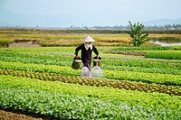 Vietnam, Farmer farming his field