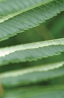 Extreme close-up of leaves with serrated edge