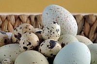 Easter eggs in basket, close-up