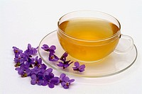 Viola odorata, medicinal tea made of Blue Violet, Sweet Violet, fresh blossoms and cup of tea, herb, medicinal plant, Viola mammola