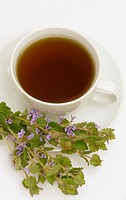 Tea made of Ground ivy, medicinal tea, herbtea, Glechoma herderaceum