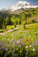USA, Washington, Mt. Rainier National Park, wildflowers and hikers