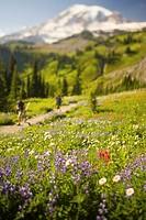 USA, Washington, Mt. Rainier National Park, wildflowers and hikers