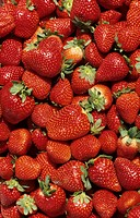 Strawberries, England, close-up
