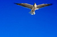 Low angle view of a bird flying in the sky, Miami, Florida, USA