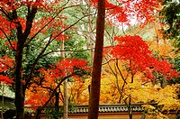 Low angle view of trees, Kinkakuji Temple, Kyoto, Japan