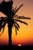 Tunisia, South, sunset