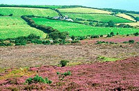 England, Somerset, Exmoor national park