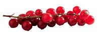 Redcurrants (thumbnail)