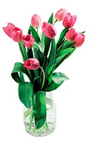 World symbols : tulip bouquet (Netherlands)