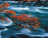 China, Red leaves and running water