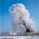 China, Snow on trees