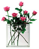 Roses in a square vase