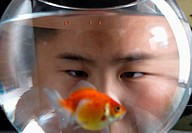 Boy watching his pet fish