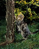 Cat-scratching-tree-sharpening-claws