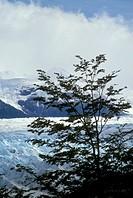 Torres-del-Paine-Natl-Park/nGrey-Glacier/nChile