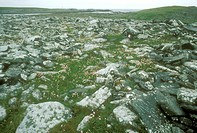 Rocky-Tundra,-Mousa-Island,-Shetlands