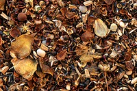 Assortment-of-Wildflower-Seeds,-dry,-mixed-together,-Emmet-Co.,-MI