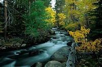 Lee-Vining-Creek-with-Aspens-and-Conifers,-E.-Sierra,-Inyo-NF,-Mono-Co.,-CA