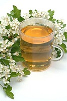 Hawthorn flower tea. Fresh hawthorn flowers (Crataegus monogyna) next to an infusion made from the plant. This tea is used as a diuretic and a tonic.