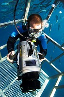Cage diving. Scuba diver with a television camera in a shark cage. He is filming great white sharks (Carcharodon carcharias). Photographed off Guadalu...