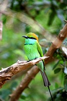 Green bird on a tree branch