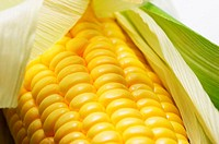 Close-up picture of a maize.