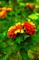 Plants with red and yellow flowers.